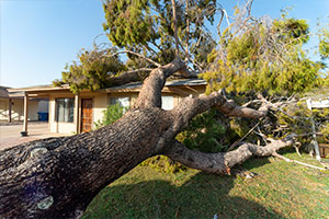 tree hit house with arborist insurance