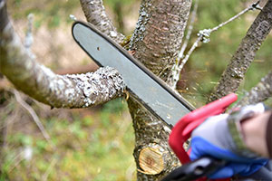 tree trimming with arborist insurance